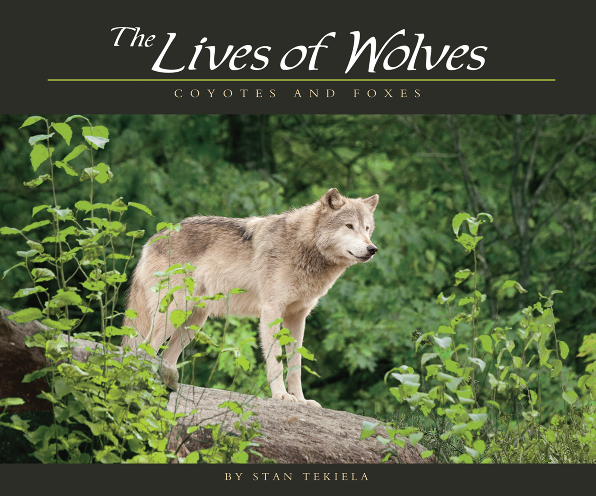 The Lives of Wolves, Coyotes, and Foxes