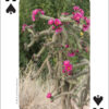 Cactus of the Southwest Playing Cards