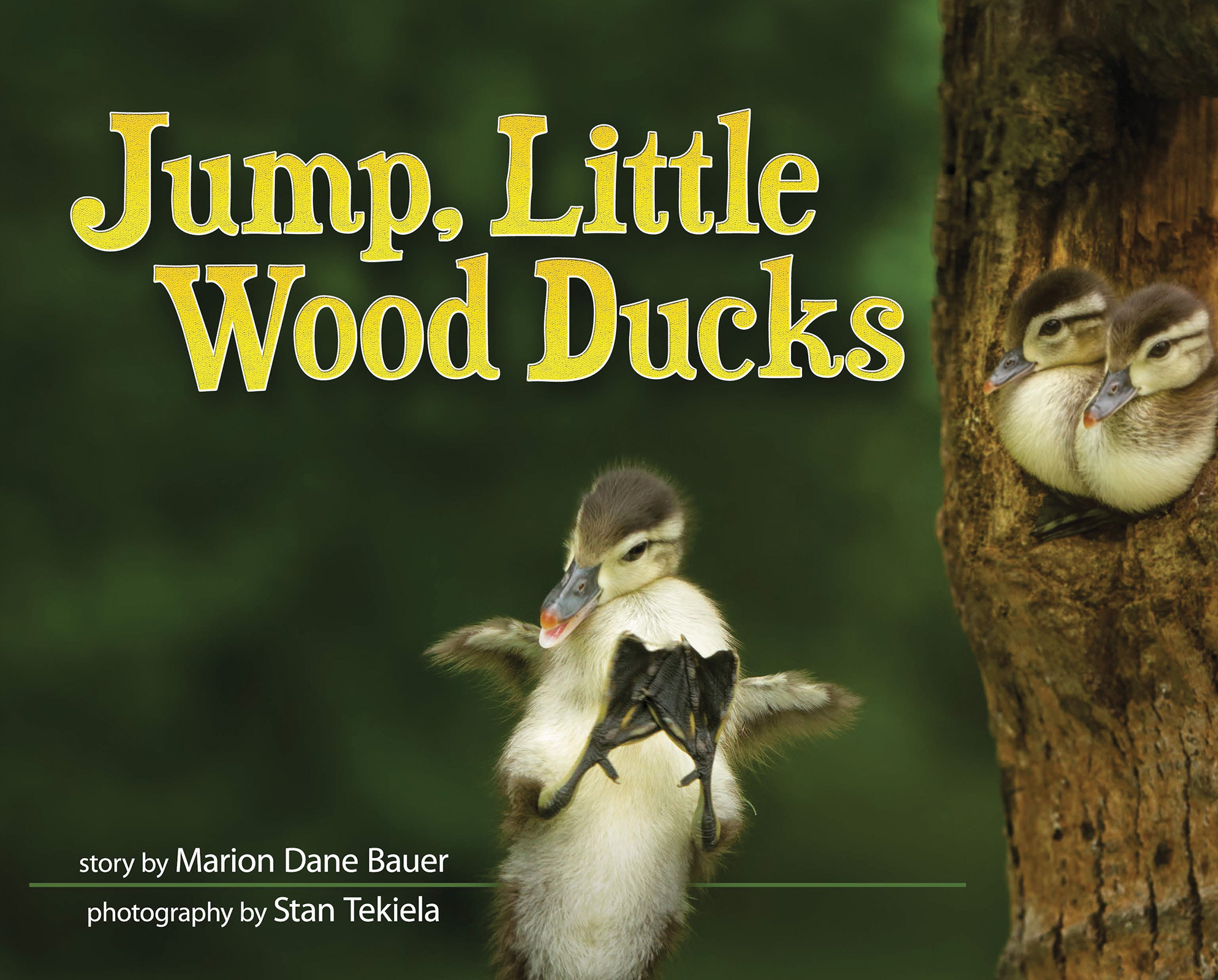 Jump, Little Wood Ducks
