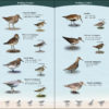 Shorebirds of the Southeast & Gulf States