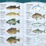 Sport Fish of the Middle & South Atlantic