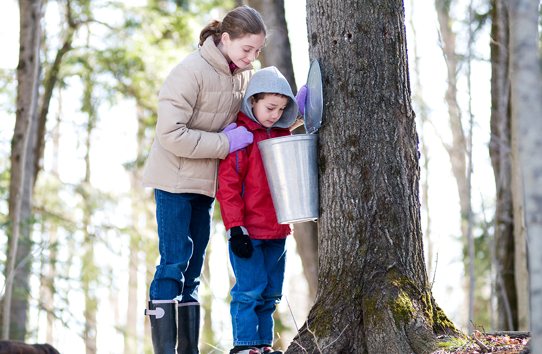 Maple syruping