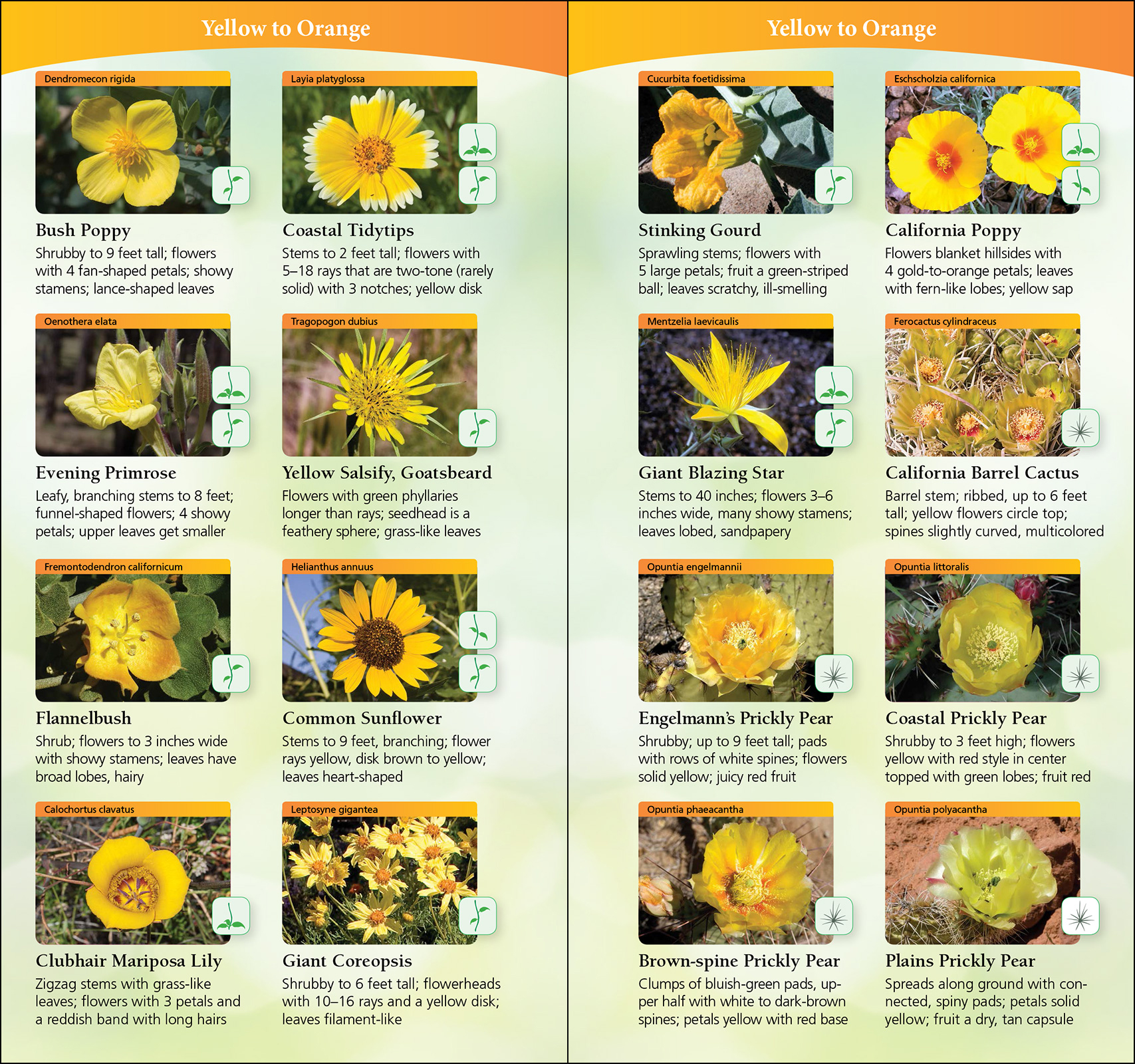 Wildflowers Of Southern California Adventurepublications