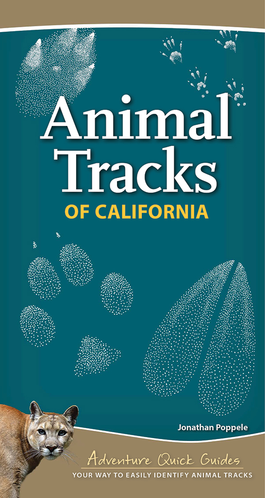 Animal Tracks of California