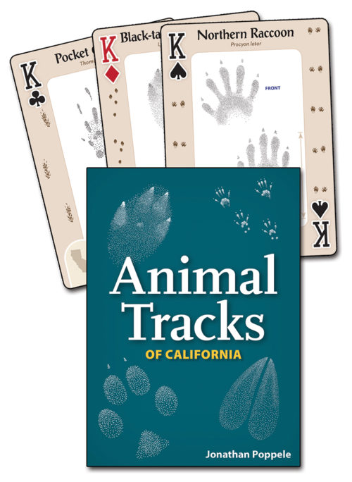 Animal Tracks of California Playing Cards