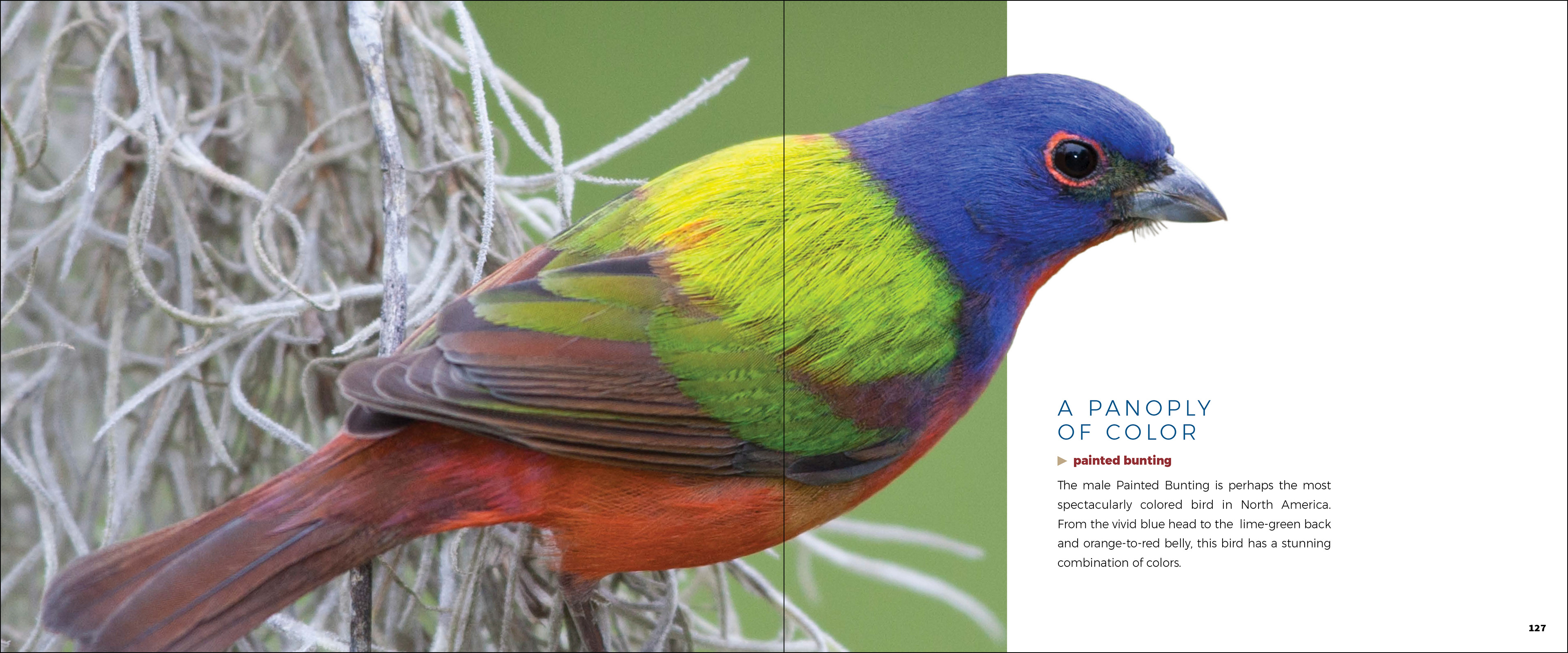red colored birds of north america - HD3840×1600