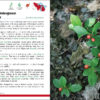 Wild Berries and Fruits Field Guide of Minnesota, Wisconsin, and Michigan