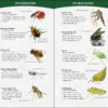 Insects & Bugs of North America