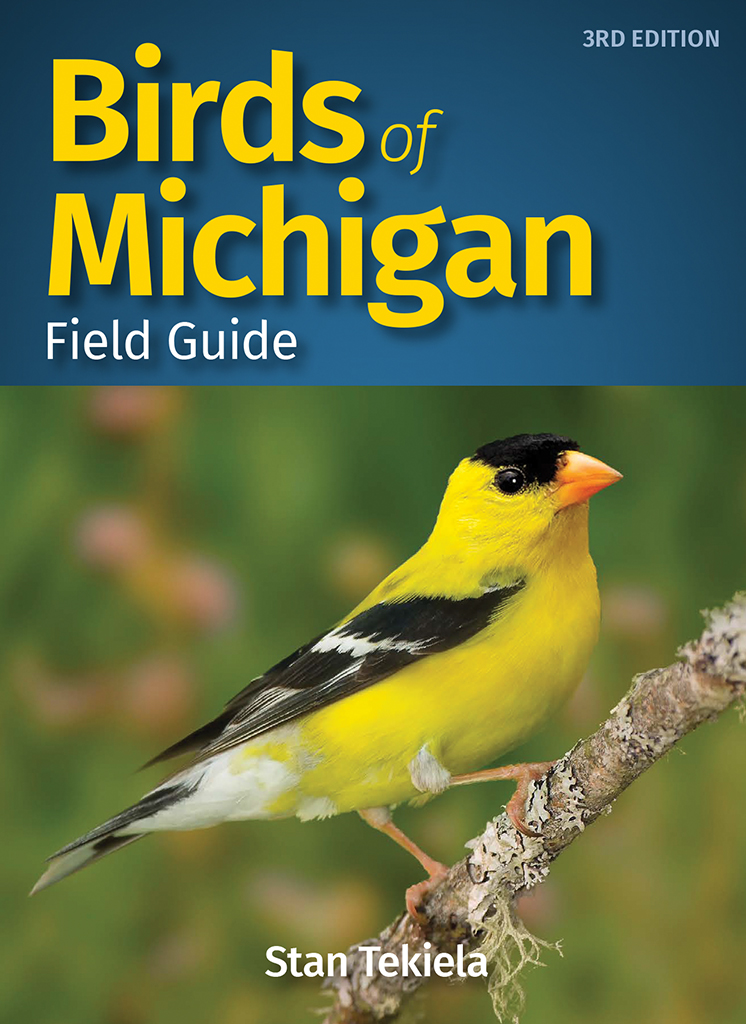 Images of birds in michigan