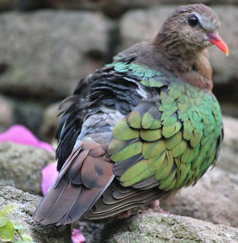 Bird_AK